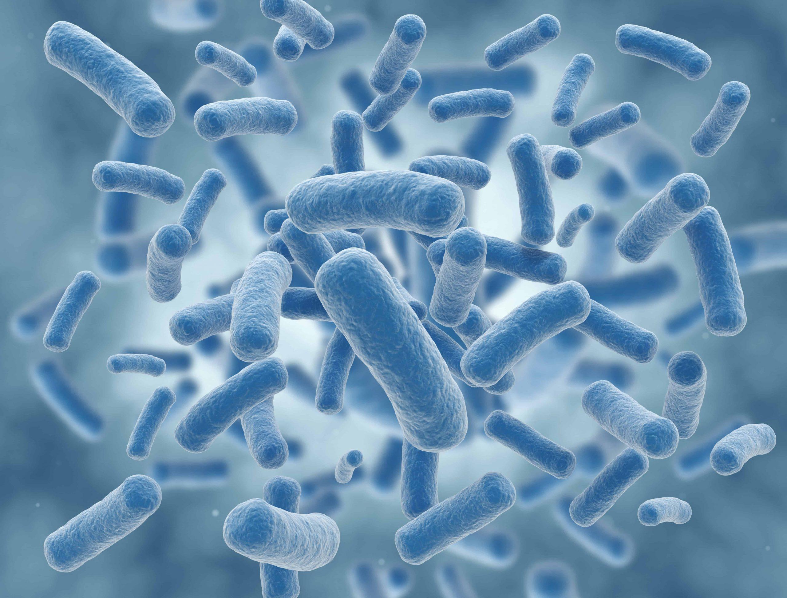 lactobacillus-gasseri-principale-xcyp1
