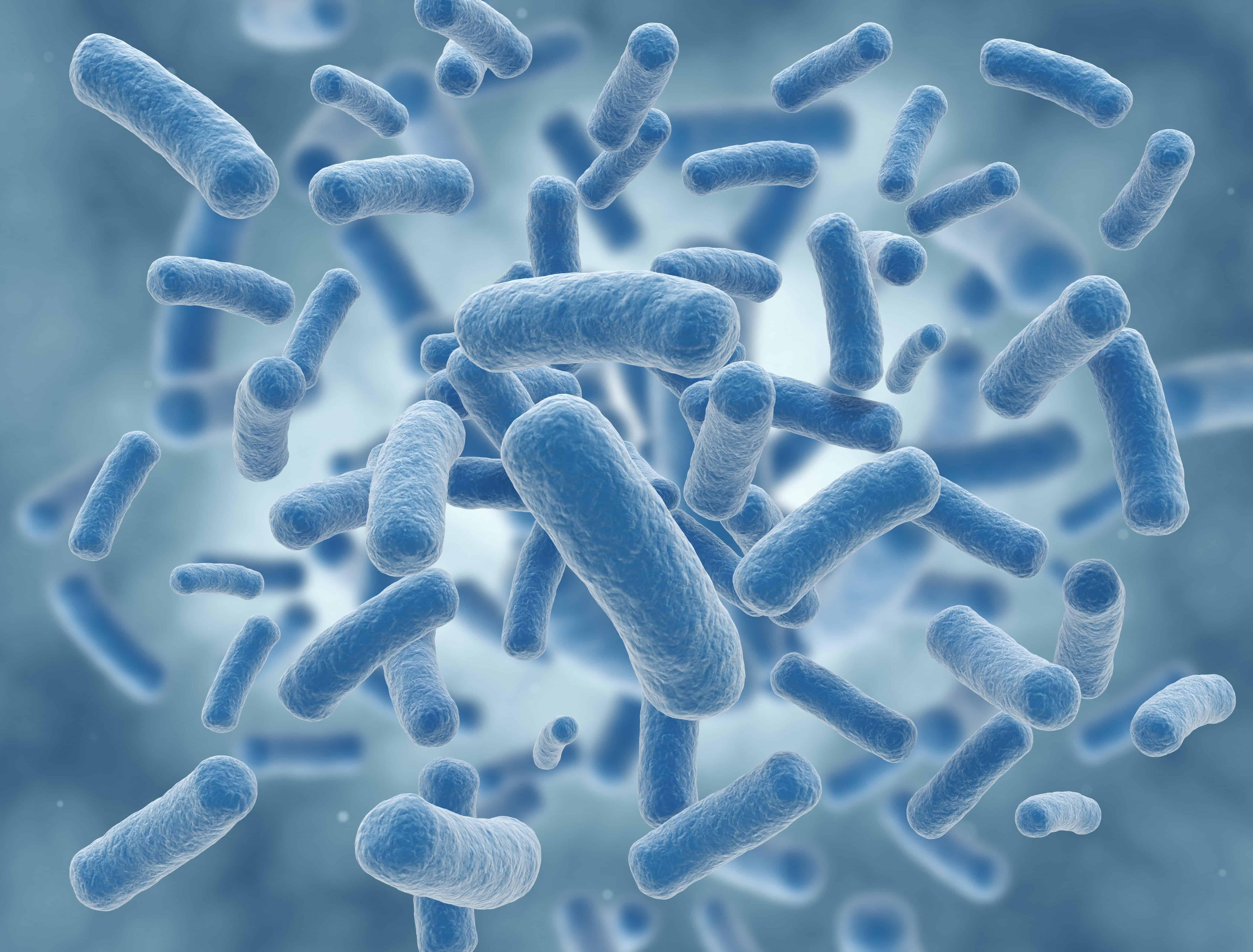 Miglior integratore di Lactobacillus gasseri 2020: Guida all'acquisto