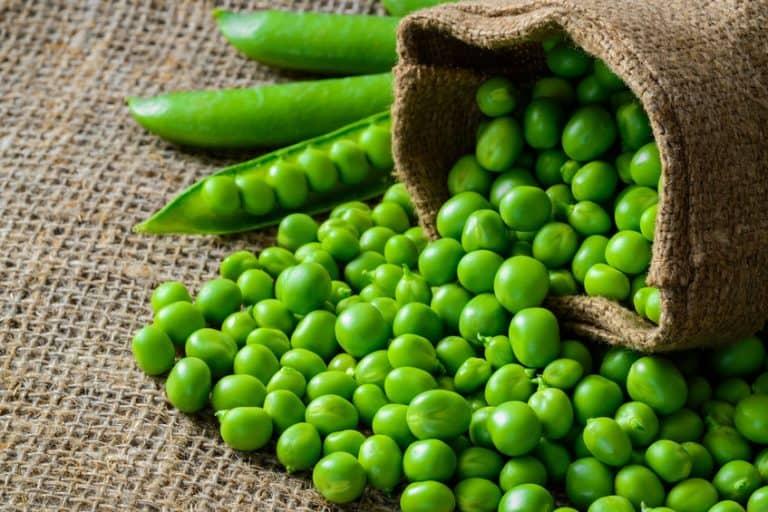 proteine-vegane-piselli-xcyp1