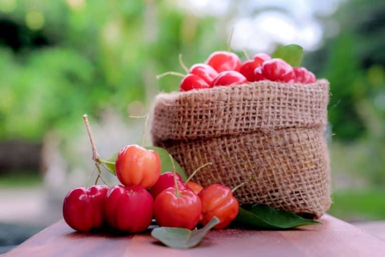 acerola-frutto-xcyp1
