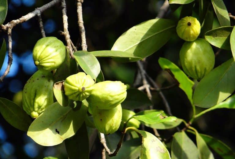 garcinia-cambogia-prima-xcyp1