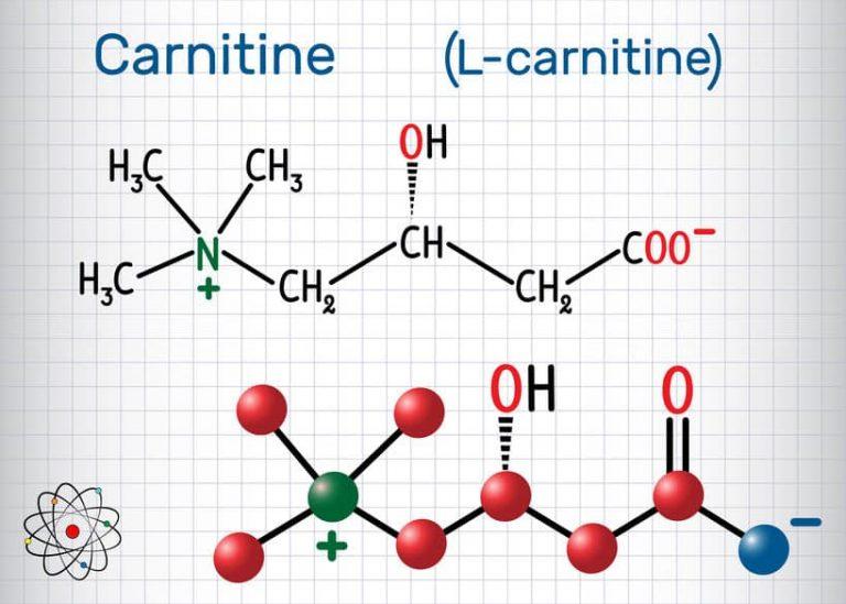 l-carnitina-chimica