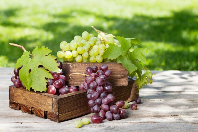 Tipi di uve