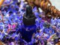 Miglior olio di borragine 2020: Guida all'acquisto