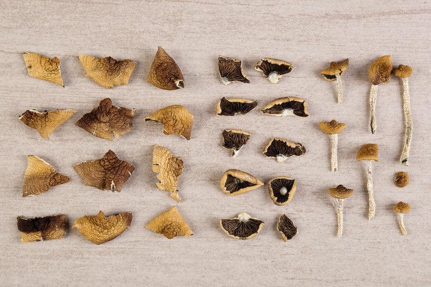 Pezzetti di funghi disposti ordinatamente